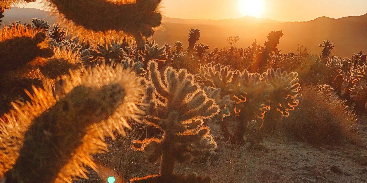 Wilder Westen, oder doch nur ein Trip in die Wüste?